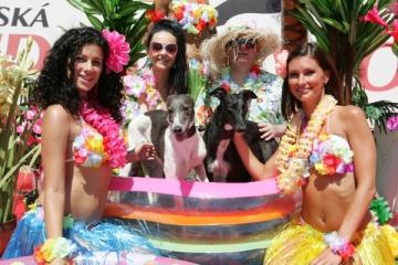 Chrtí princezny Chanel a Dior s majiteli a krásnými havajankami