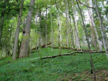Probíhající změna klimatu výrazně zvýší frekvenci velkoplošných kalamit hospodářských lesů