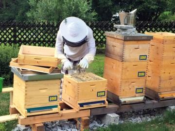 Siegmar Lengauer, pracovník firmy PORR, v roli včelaře: při práci se svými včelami se musí velice soustředit. © PORR