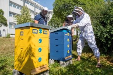 PORR staví domovy včelám