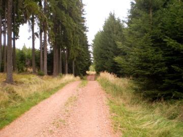 Brdecká lesní cesta